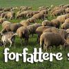 Otteogtyve får. Det var vigtigt i øjeblikket.