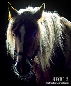 Den jydske hest fås kun i sort, brun og rød. Jydske heste har som hovedregel fire ben.